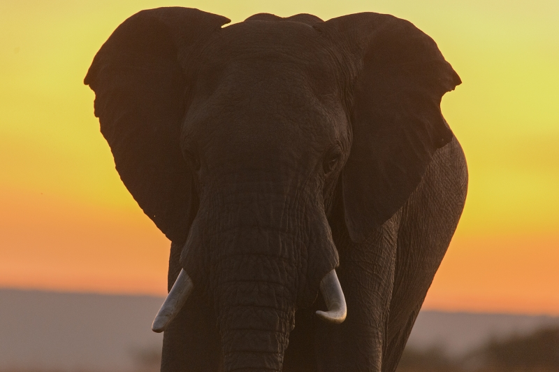 Sunrise Elefant