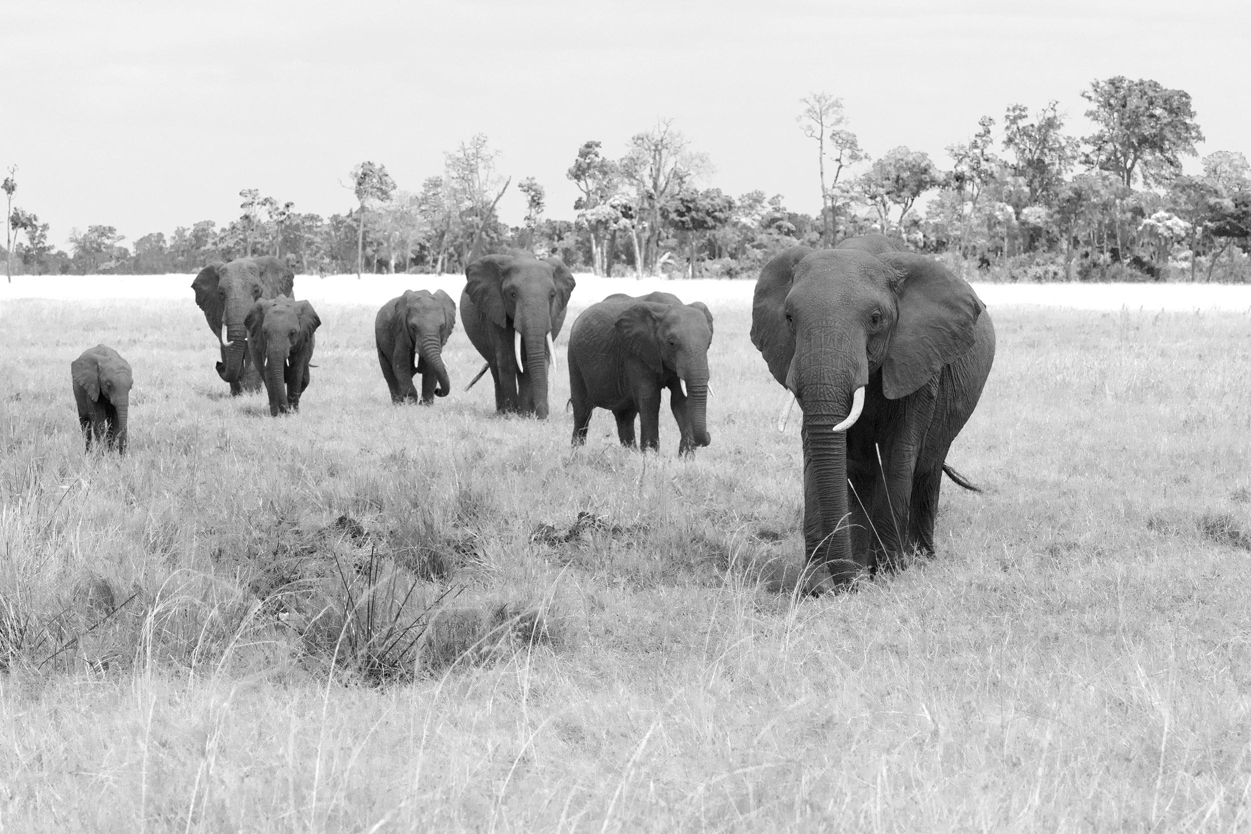 Elefanten sw