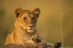 Mara 2015-4896.jpg