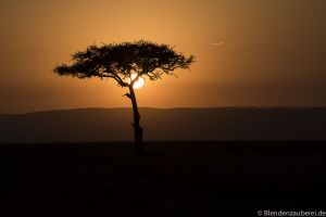 Mara 2015-1022.jpg